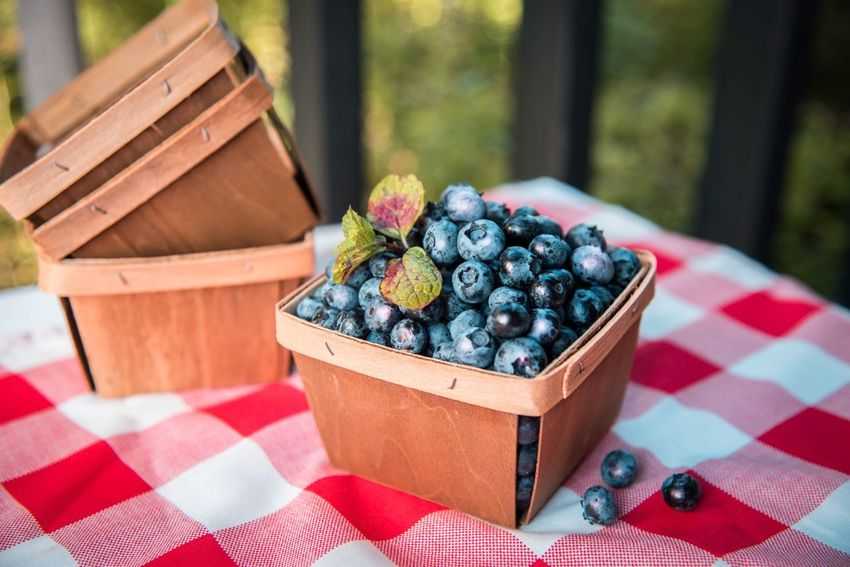 On the porch. Check This Out Taking Photos Relaxing Blueberries Food Porn Foodphotography Food Photography Berries Fruit Photography Berry Hello World The Essence Of Summer Food Styling Stockphoto StillLifePhotography Still Life Photography Still Art Stock Image Stock Photo Stock Photography Stockphotography Stock Photos Still Life