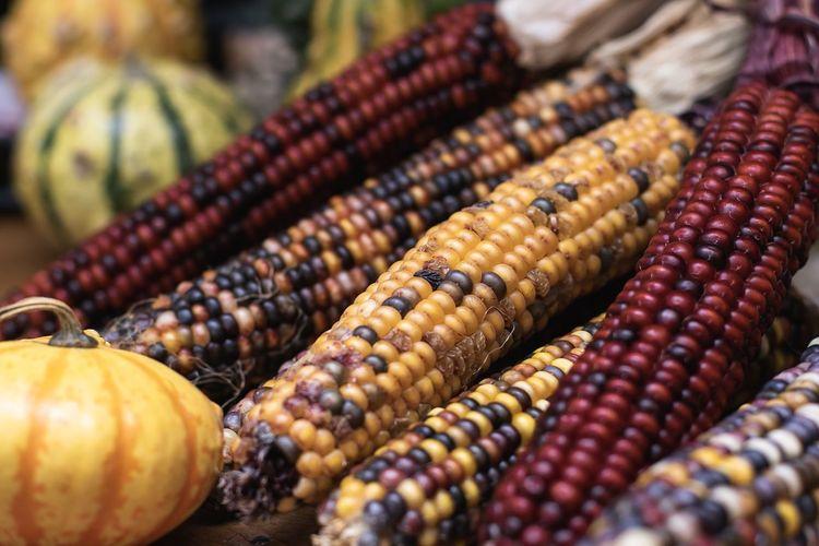 Close-Up Of Pumpkins And Dry Corns