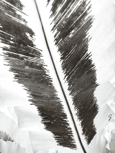Leaf Leaves Leaves Collection Leaf Photography Nature Abstract Pettern Of Leaves Pettern Pattern And Color Leaves Close Up Leaf Collection Beauty Of Leaves Close Up Close Up Photography Leaves Photography Leaves And Colors Leaf Pattern Beauty Of Nature Creative Color On Leaves Texture Of Leaves Forms And Shapes Black And White Black And White Photography Leaf Color Leaves Color