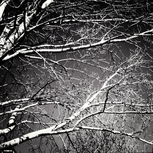Blackandwhite The Minimals (less Edit Juxt Photography) Trees Winter