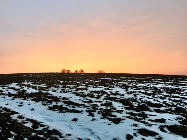Sunset 🌅 Bare Trees Sunset Nature Winter Beauty In Nature Cold Temperature Snow Scenics Tranquility Tranquil Scene Sky Frozen Outdoors Landscape Idyllic No People