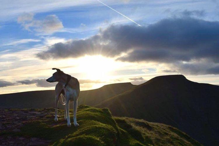 Dog on landscape against sky during sunset