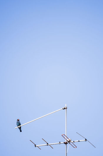 Low angle view of bird perching on antenna against clear sky
