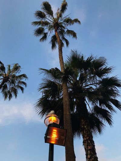 Tree Palm Tree Low Angle View Sky Tree Trunk Illuminated Growth No People Outdoors Blue Architecture Beauty In Nature Day Nature EyeEmNewHere