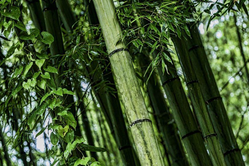今日は1日雨模様でした EyeEm Nature Lover Green Leaves Bamboo Forest Rainy Days Hanging Out Hagging A Tree Beatiful Nature EyeEm Gallery Eye4photography  To Take Off Daily From My Point Of View On A Date お疲れ様でした😌