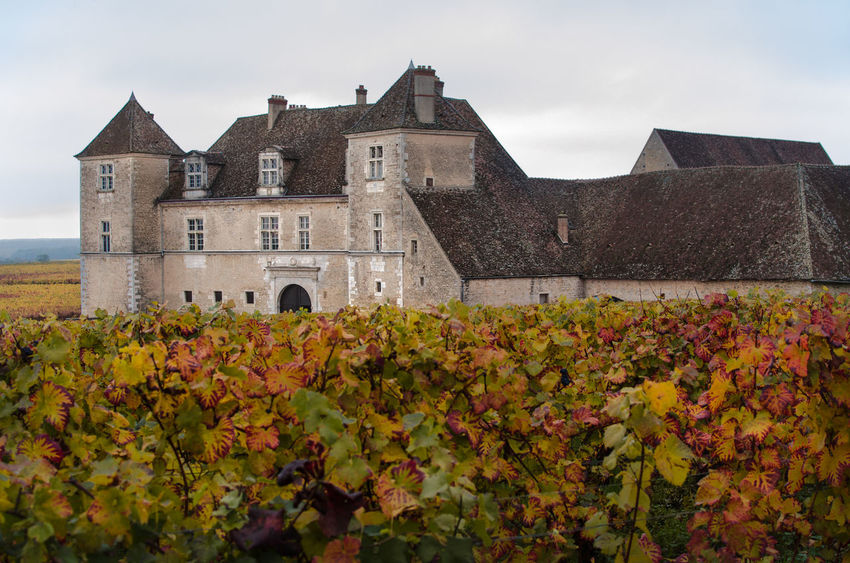 Architecture Autumn Beauty In Nature Bourgogne Building Exterior Built Structure Burgundy Castle Day Flower Growth Historical Building History House Leaf Leaves Nature No People Outdoors Plant Sky Vine Vines Vineyard Wine Growing The Architect - 2017 EyeEm Awards