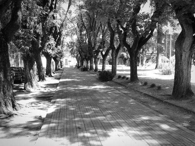 Bnw_friday_eyeemchallenge Eyem Black And White Black And White Photography Black And White Taking Photos