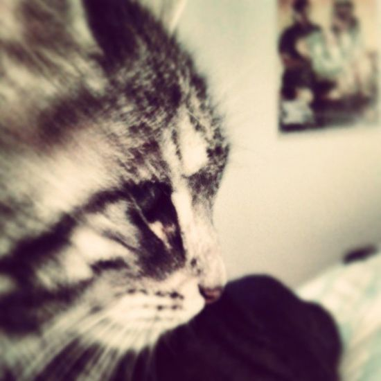 Lilly Miezekatze Meow Mylittlecat Love