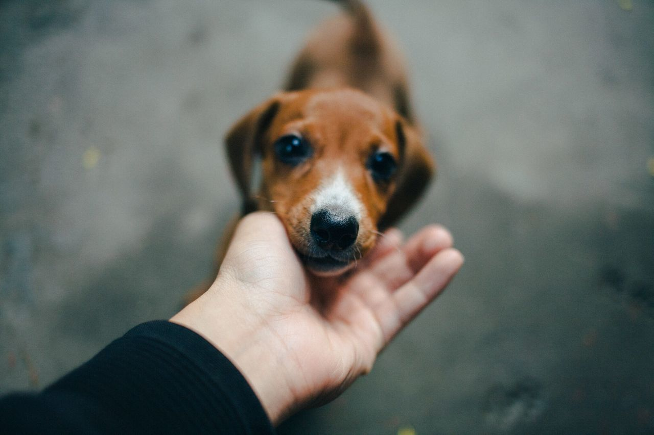 Close-up of hand touching puppy