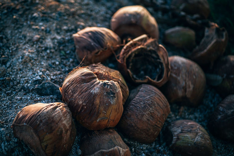 Pile of Dried coconuts placed on sand in coast, dry Coconut peel off for sales market. Tropical organic food. Agriculture Coconut Dried Food Exotic Freshness Palm Palm Tree Beach Brown Close-up Day Dried Focus On Foreground Food Food And Drink Fresh Milk Nut - Food Outdoors Solid Still Life Textured  Tropical Tropical Climate White