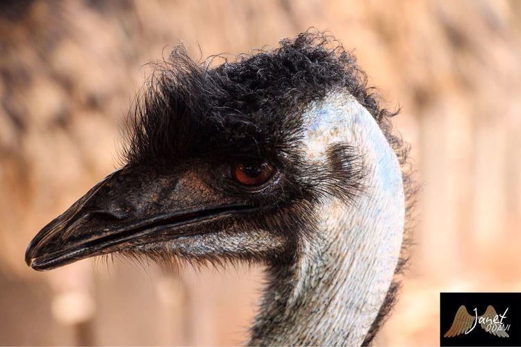 Emu bird 😊😊
