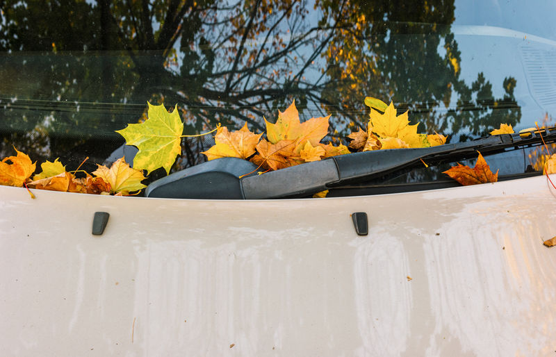 autumn leaves on a car window with windshield wipers Autumn City Cleaning Nature Orange Weathered Brown Car Car Interior Car Window Clean Colorful Fall Foliage Leaves Maple Leaf No People Refection Season  Window Windshield Wipers Yellow