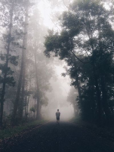 People in forest during foggy weather