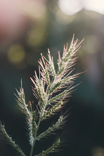 Grass EyeEm Best Shots Grass Beauty In Nature Close-up Growth Nature No People Outdoors Photography Plant