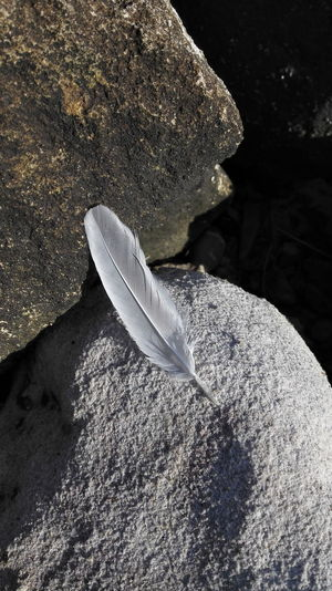 Feather  Imagination by FeBird No Filter Mobile Photography