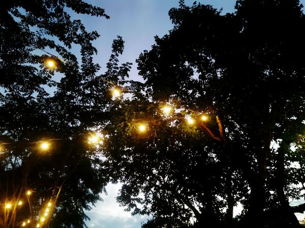 Tree Night Illuminated Low Angle View Outdoors No People Nature Sky Beauty In Nature Ligths Cafe Time