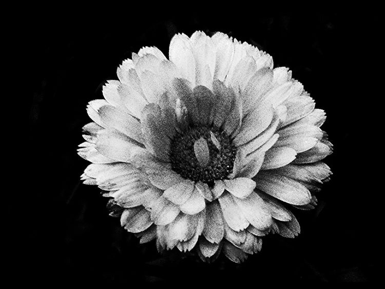 Flower Black&white