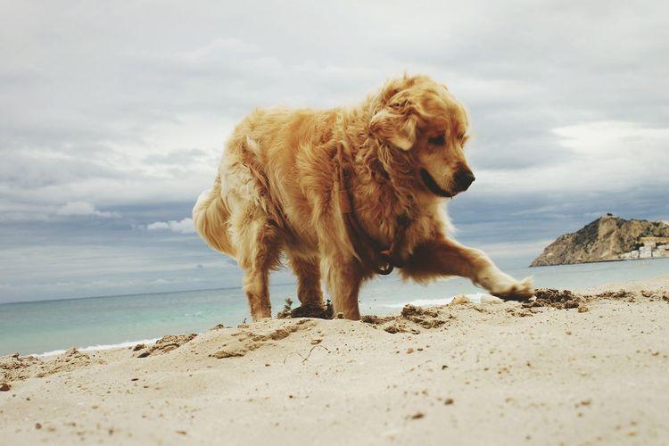 Dog On Beach Against Sky