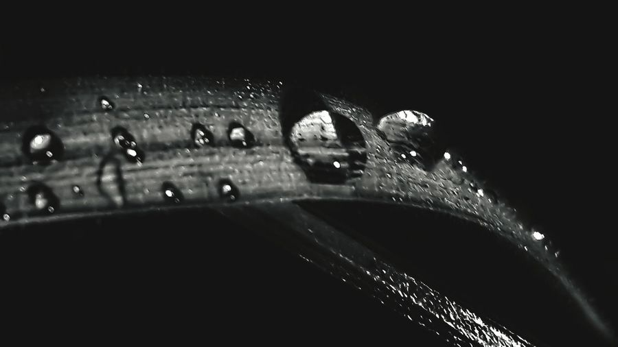Outdoors Grass First Eyeem Photo EyeEmNewHere EyeEm Nature Lover Smartphonephotography Nightphotography Blackandwhite Water Close-up Water Drop Droplet RainDrop Drop Rainy Season Dripping Rain Wet Blade Of Grass My Best Photo