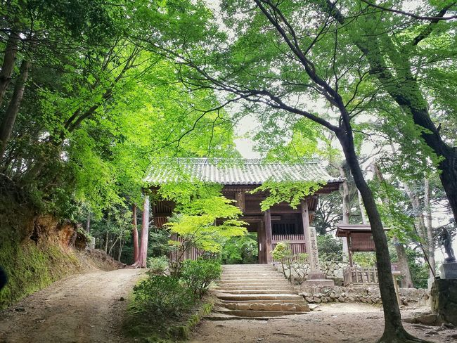 Niōmon gate at Engyoji Temple complex || Mount Shosha Travel Travels Traveling Travelling Explore Outdoors Nippon