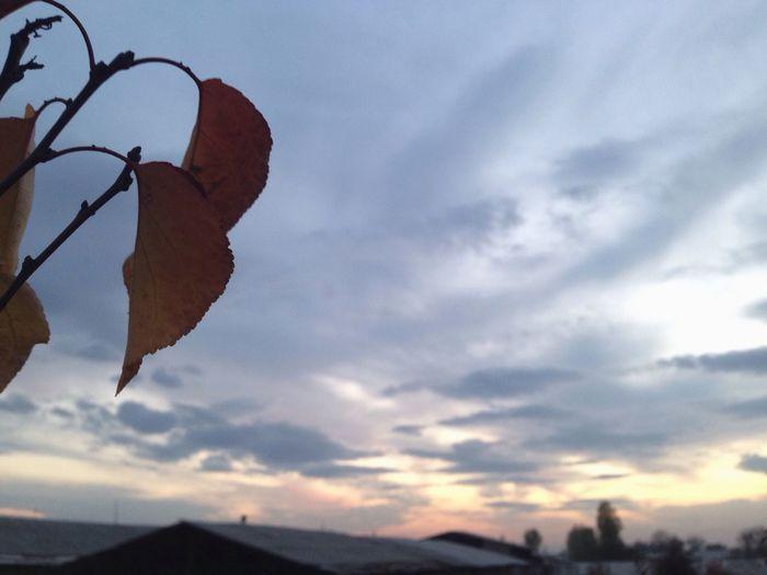 Nature Automne Sky