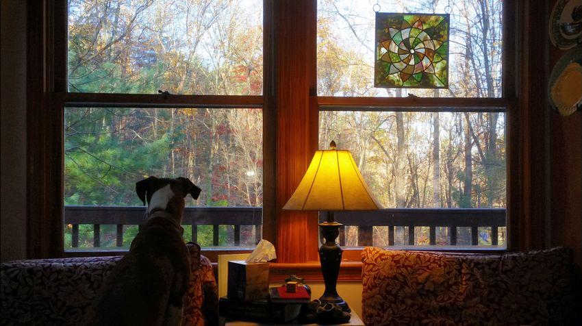 Window Looking Through Window Dogslife Keeping Watch Dog Love Dog Window View
