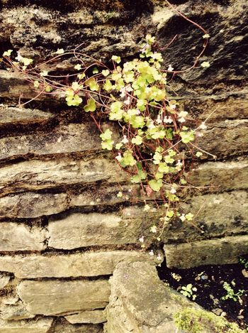 The Perks Of Being A Wallflower Wallflower Flower Ivy Bricks Wall