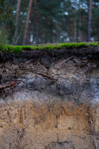 Geography Soil And Grass Close-up Day Details Layers Nature Podzol Soil Soil On The Ground