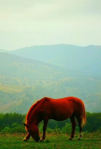 Horse Simplelife in Talea, Romania
