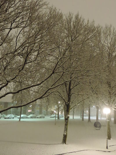 Nightphotography Oudoors Snow Covered Snow Nature Photography SNOW NIGHT Snow Plants Snow ❄ Snowing