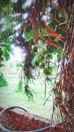 Udaipirlover Lake Palace Udaipur Vijendrapaliwla Myclick💚 My Click !♥ MyClick