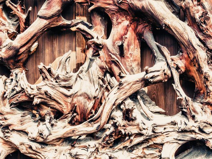 Full frame shot of dried tree trunk