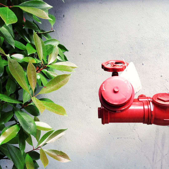 Close-up Differences  Fire Hydrant Garden Green Leaves No People Plant Red Wall Water Break The Mold Nature And City Oddity