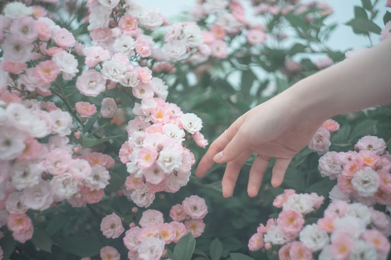 Cropped Hand Of Woman Touching Flowers Growing On Plants At Park