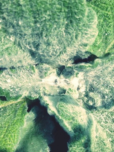 Salvia Flowers Water Drop Macroclique