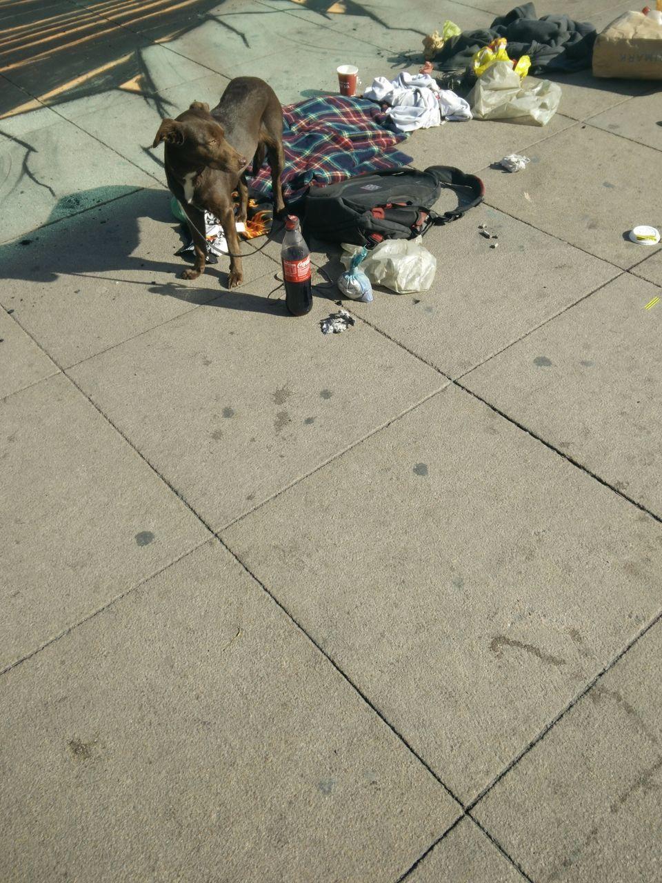 Dog Standing On Sidewalk