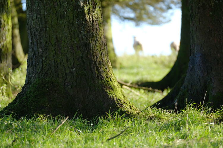 Close-up of tree trunk in field