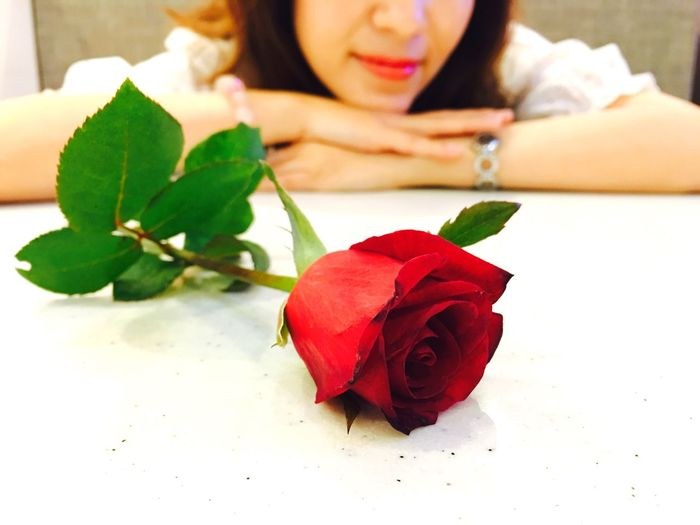 Close-up of red rose against woman leaning on white table