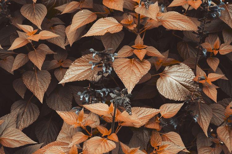 Bushes, leaves... blätter...yapraklar