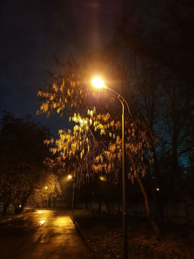 Illuminated street lights by trees in city at night
