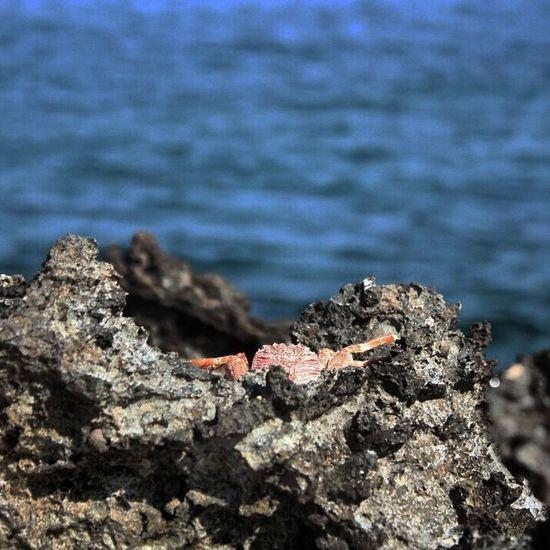 Beach Life. Animal Wildlife Sea Outdoors Be. Ready. EyeEmNewHere Canoneos450D Beach