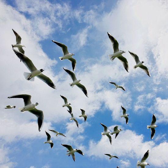 Fühlt sich an wie Frühling. Hitchcock Duesseldorf Rheinspaziergang Flying Bird Sky