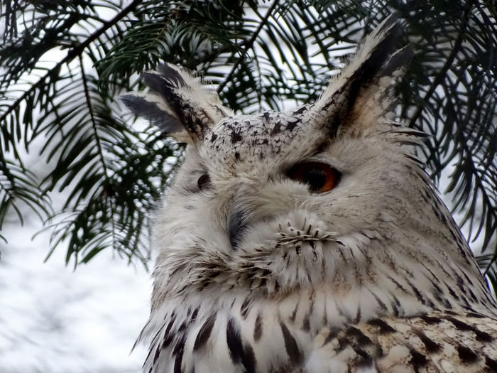 Owl Bird Photography Tree One Animal Low Angle View Animal Themes Day Animals In The Wild No People