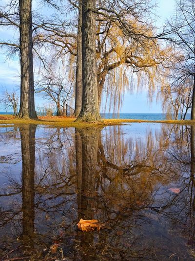 Reflection In The Puddles Trees Reflecting Peaceful Spot Willow Tree Willow In Spring Serenity Port Credit Solitude By The Water Showcase: March