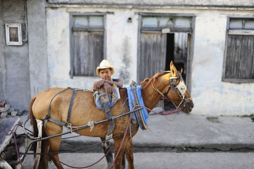 Animal Themes Bridle Brown Building Exterior Cowboy Django Horse Horse Cart Horsedrawn Mammal Outdoors Western Working Animal