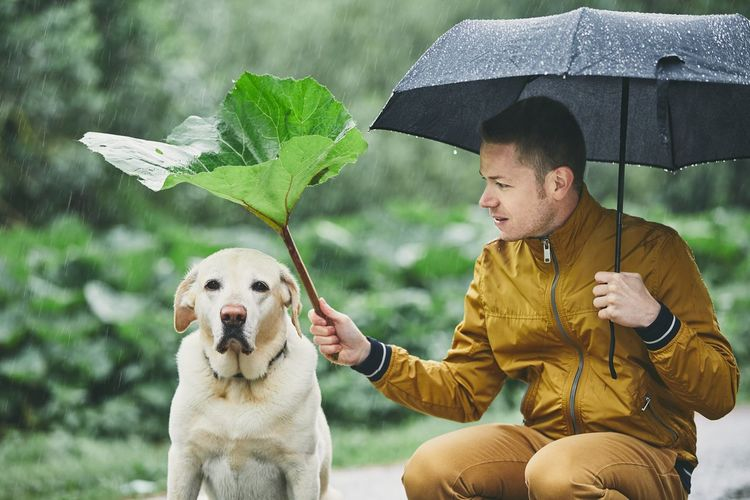 Rainy day with dog in nature. Young man with umbrella holding leaf of burdock above his sad labrador retriever. Care Funny Plant Raindrops Weather Burdock Canine Covering Dog Domestic Animals Drop Friendship Hiding Holding Leaf Men One Person Pet Owner Pets Protection Rain Rainy Season Real People Togetherness Umbrella