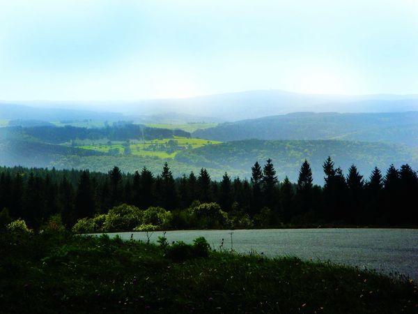 Nature Natur Wald