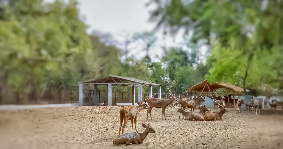 Panoramic view of horse in ranch