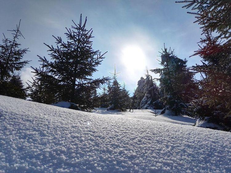 Snow ❄ Trees Mountains Lysahora Czech Republic Beskydy Winter Trekking Sun Sunshine