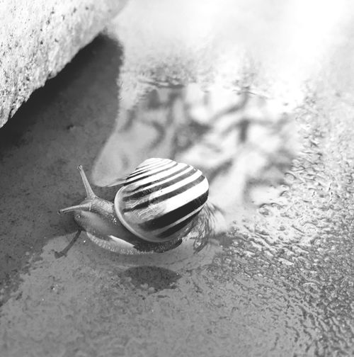 Snail🐌 Reflections In The Water IPhone Photography Black & White